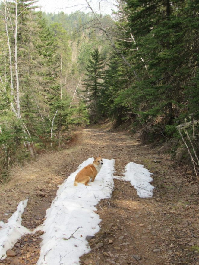 Lupe found several patches of snow on the road in the upper reaches of Rubicon Gulch. This one was the largest of all. Photo looks E.
