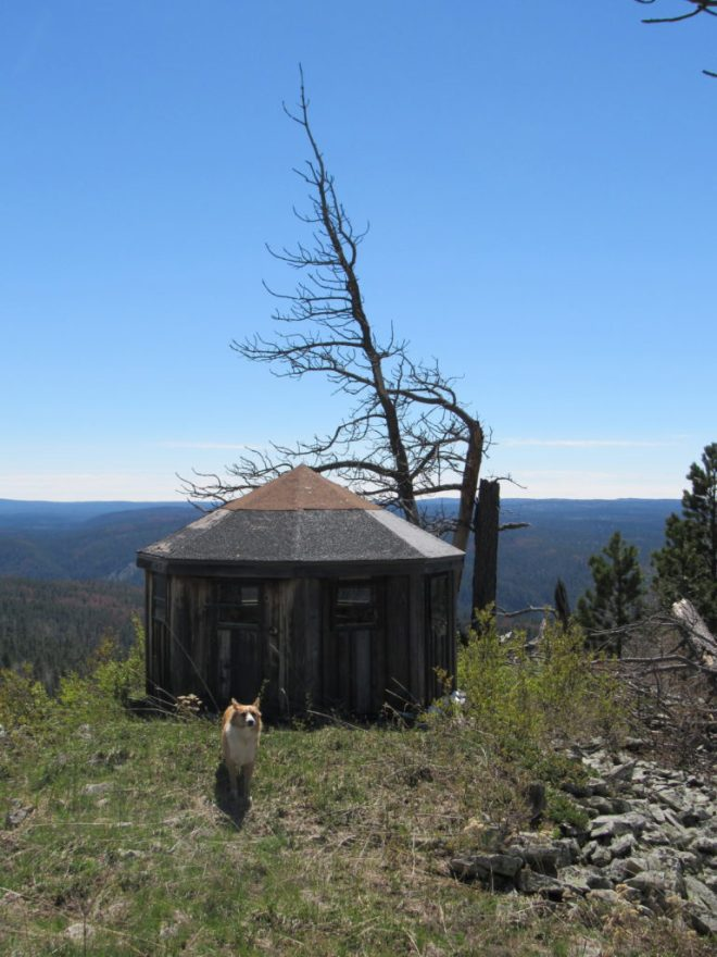 Lupe near the strange little building on Elk Mountain. SPHP thought it might contain a hot tub, but it didn't. It appeared to be a child's playhouse. Photo looks SSW.