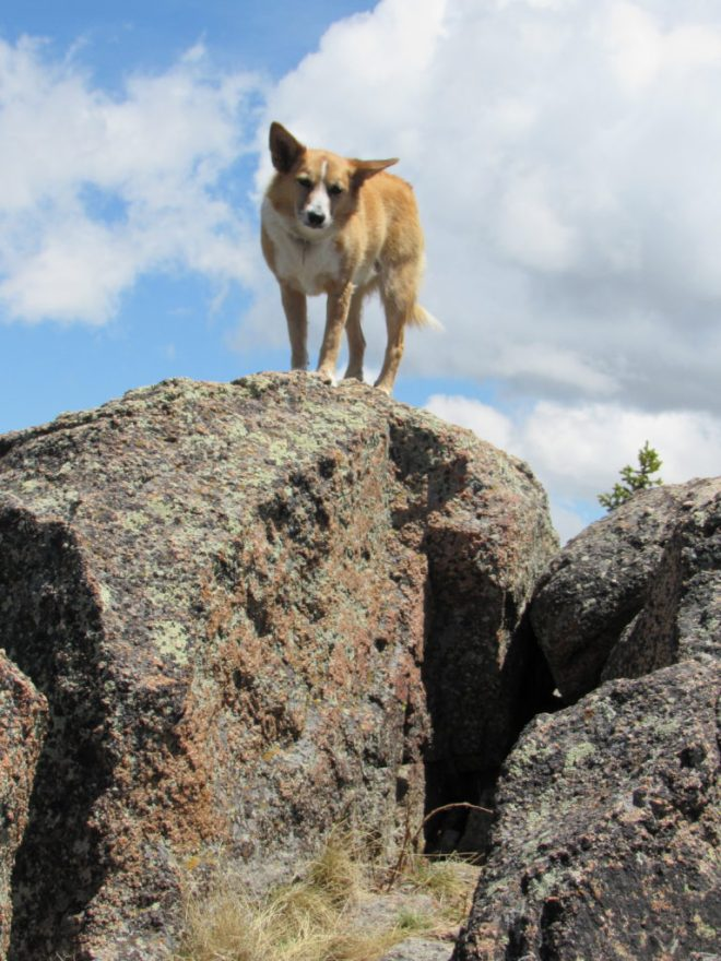 Lupe stands at the summit of Twin Peaks, just above the slot in the rocks where she'd taken her rest break. Photo looks E.