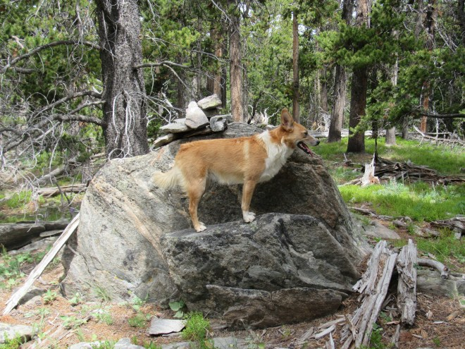 Nice job, Lupe! This must be Edward Earl's 4 foot high boulder with a cairn on it. The final Washakie County High Point candidate is close by to the W!