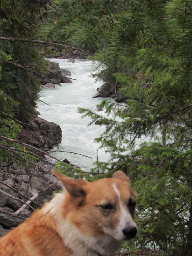 Lupe returns to the Overlander Falls trail.