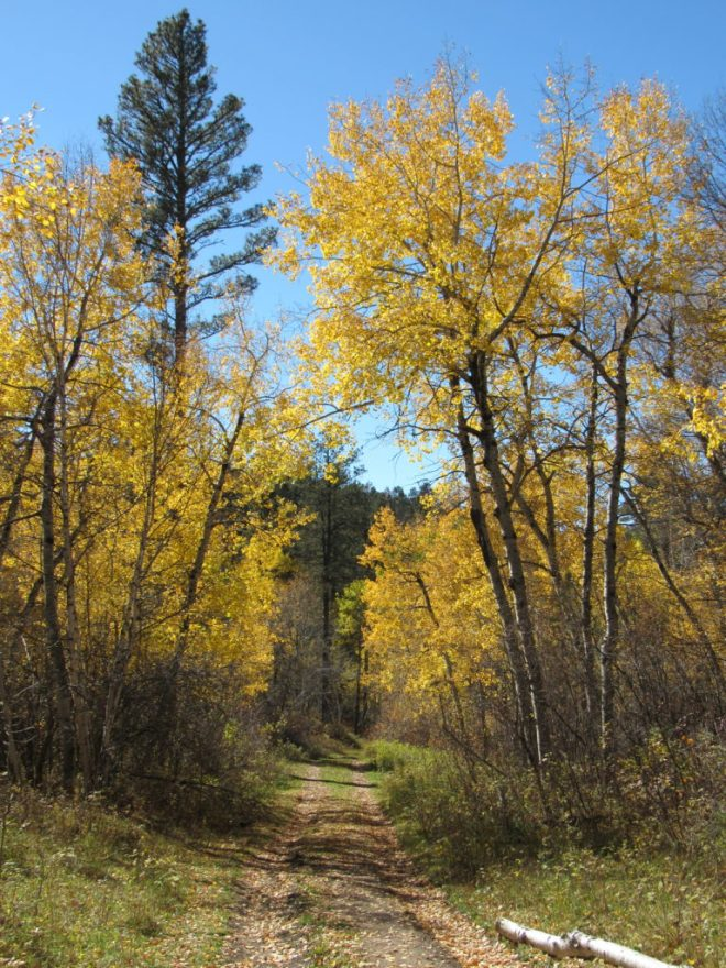 Although Lupe and SPHP went the wrong way on USFS Road No. 872.1F, seeing fall colors like these a second time around could hardly be considered a waste of time.