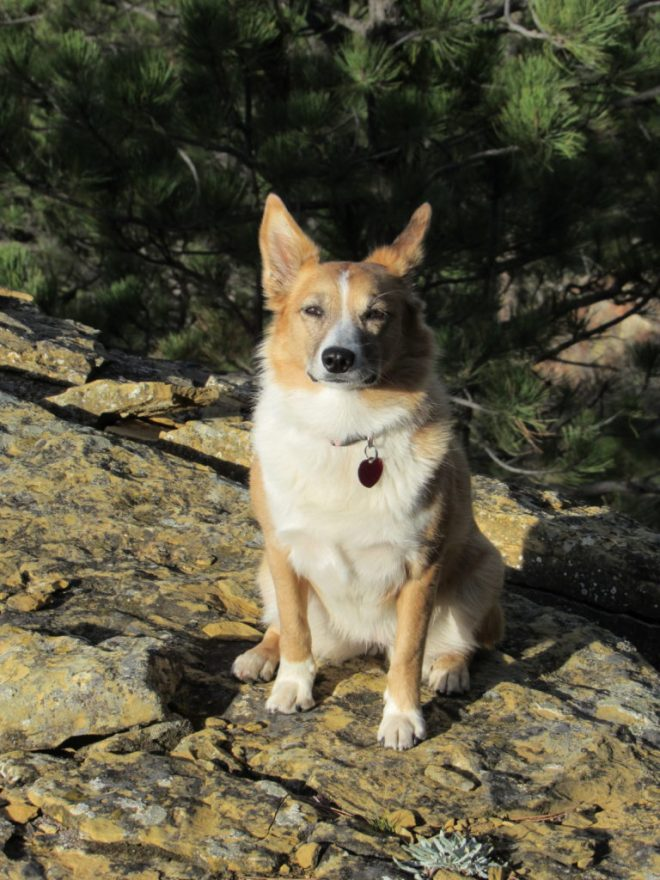 Lupe sits on the yellowish tan limestone or sandstone rock outcropping at the NW end of the Black Hills (East) summit ridge.