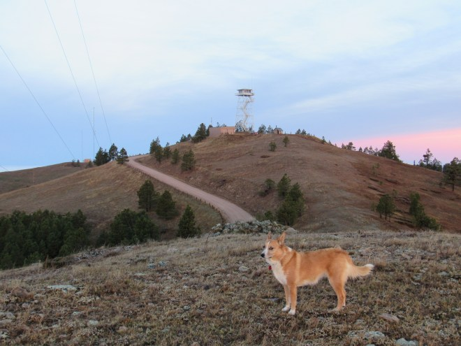 The Warren Peaks fire tower from the barren hill to the SE.