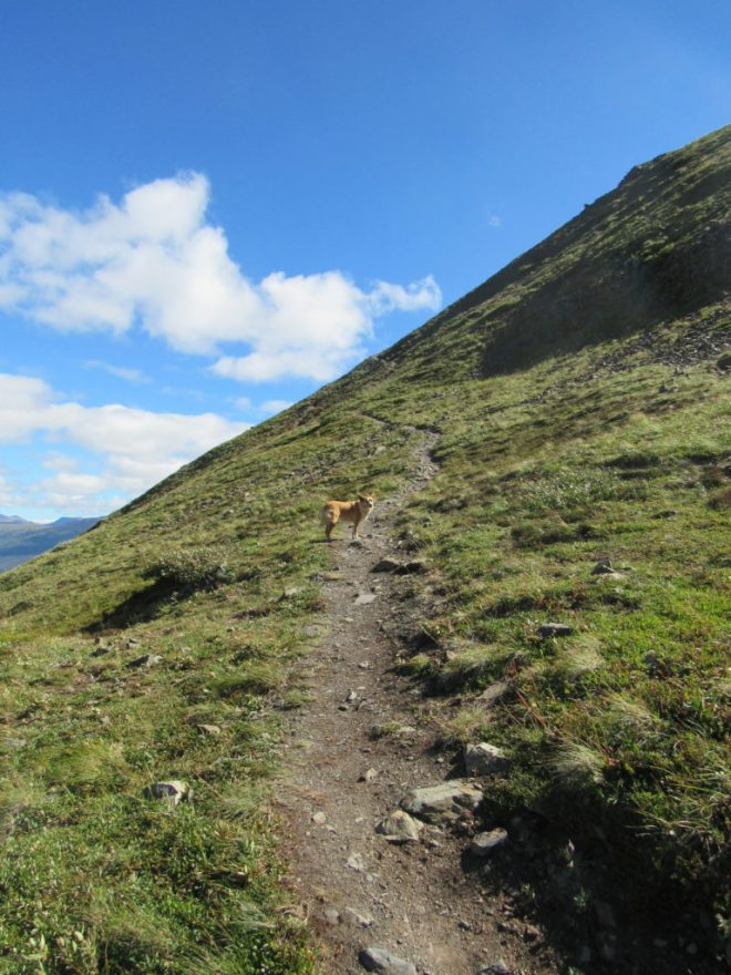 """Lupe starts on the """"route"""" to King's Throne summit. The steep rate of climb the route would soon adopt is evident on the slope ahead. Photo looks SE."""