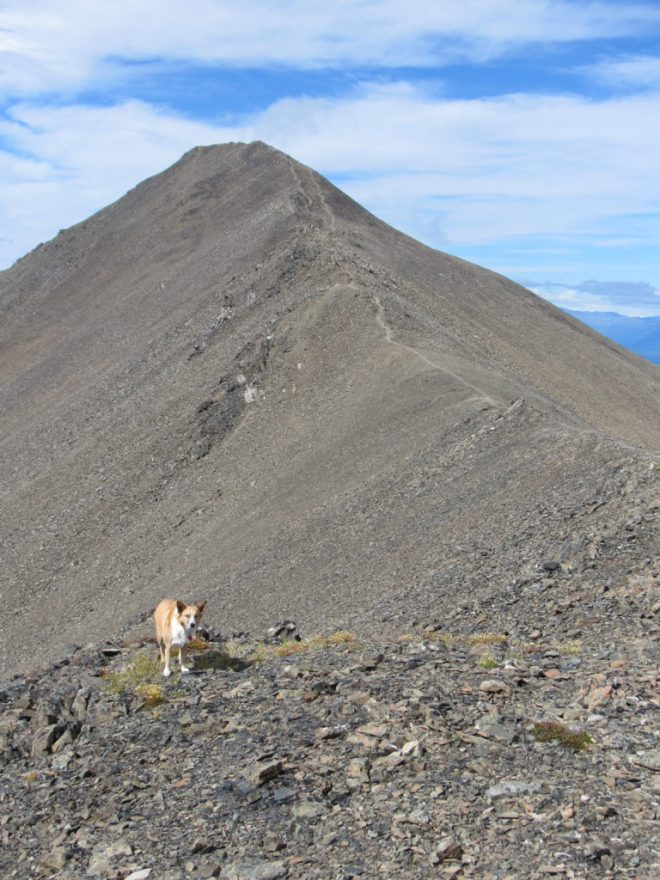 Lupe on the final approach to the King's Throne Peak summit. Photo looks NNW.
