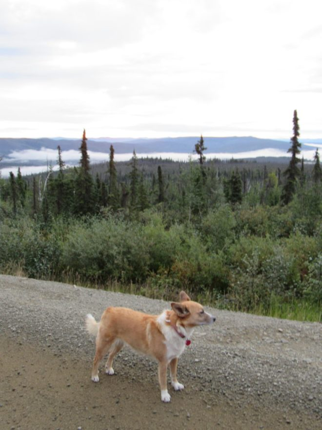 Lupe on the Dalton Highway early on 8-13-16, Day 15 of her Summer of 2016 Dingo Vacation. The sky was overcast, and fog hung in some of the valleys.