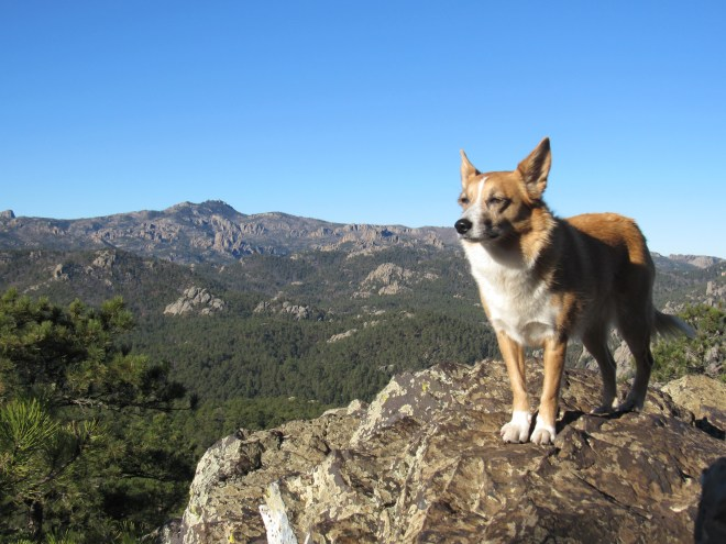 Lupe on Iron Mountain. Harney Peak, the highest mountain in South Dakota, is in the background. Photo looks W.