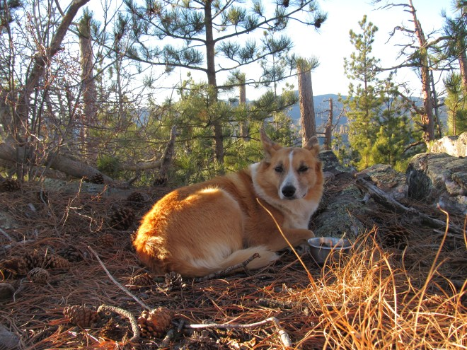 Lupe relaxes on Woodpecker Ridge while SPHP checks the topo maps.