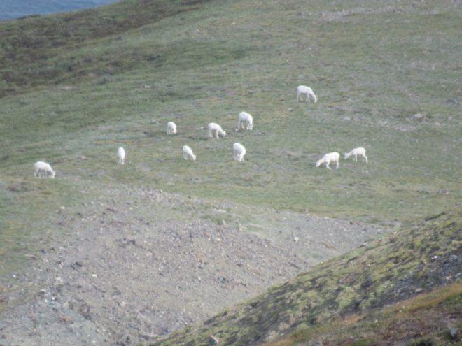 Sheep Mountain, Kluane National Park, Yukon Territory