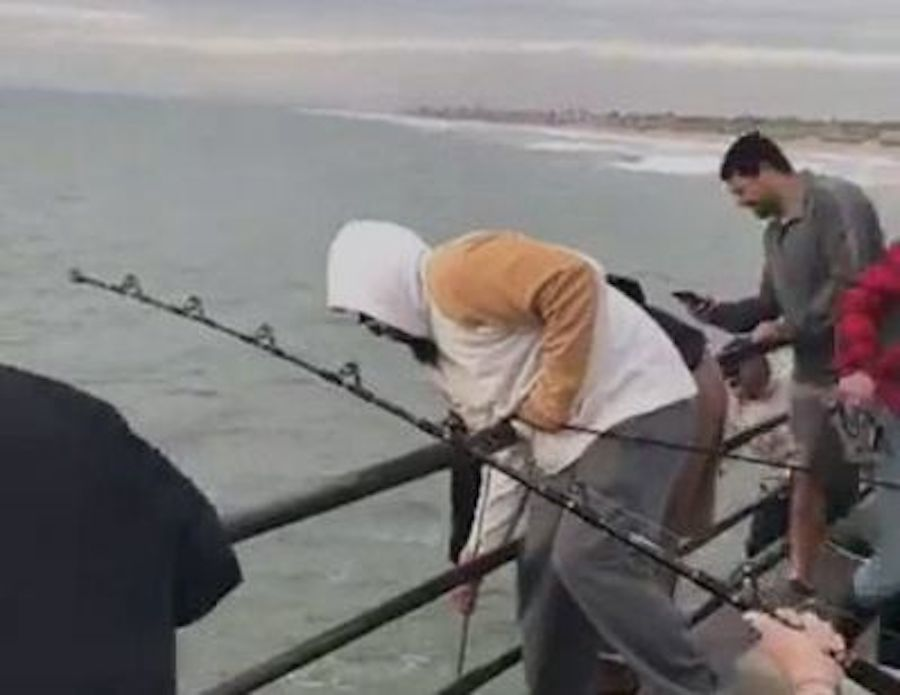 Great white shark caught from pier is under investigation