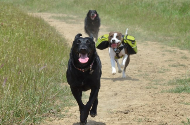 willow running with Chuck and Dorian