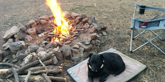 dog sitting on her pad next to a roaring campfire