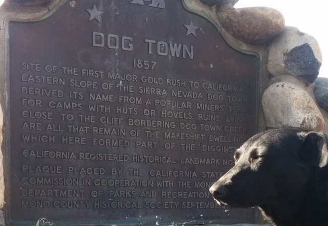 Willow getting some quick sun and Close up of the Dog Town roadside marker plague