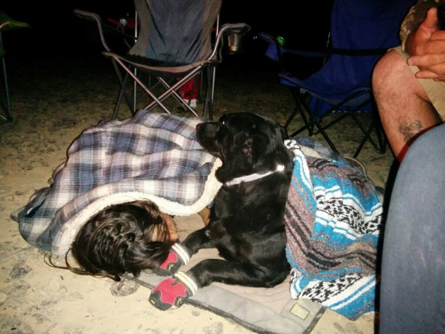 Willow on her bed next to a campfire covered in a blanket with one of her young human friends