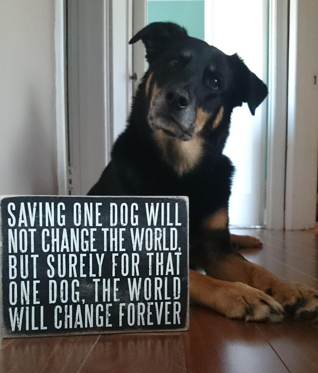 The Quotes – Adventures With Dog