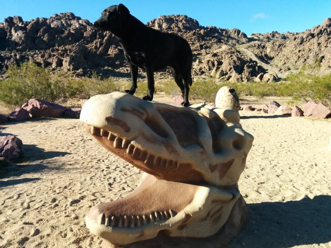 Willow standing on top of a concrete T-Rex Skull