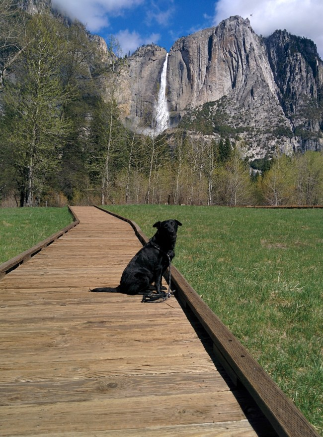 Willow on a Meadow Protection Boardwalk