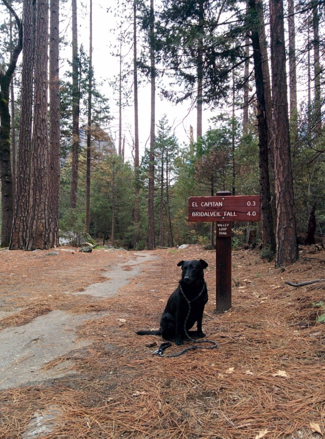 Willow in front of an El Capitan and Bridalveil Fall sign