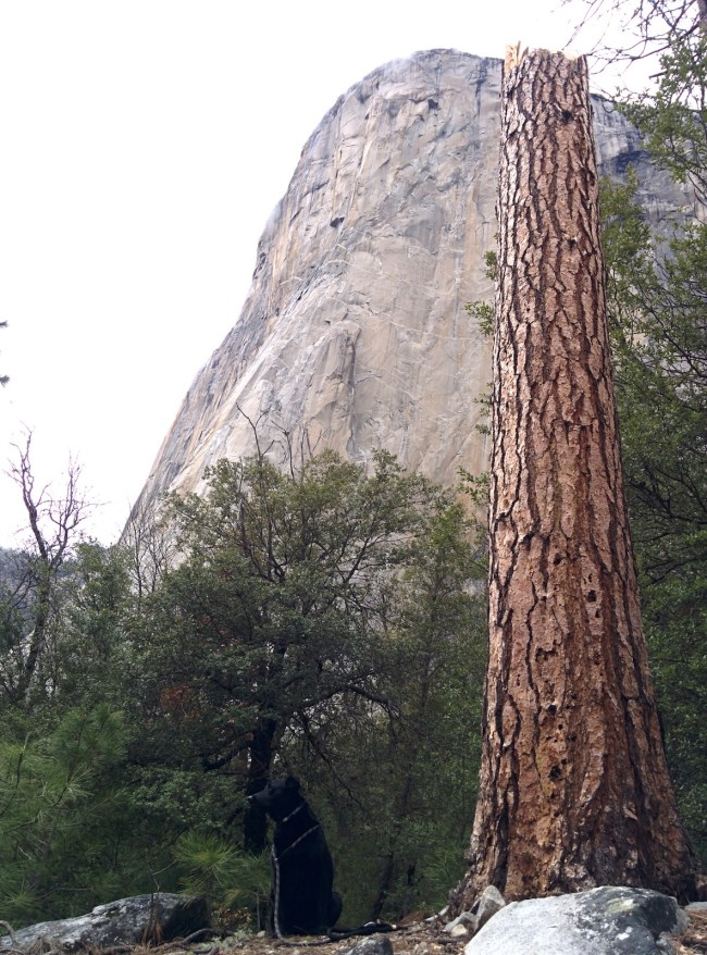 Picture Looking Up at Willow and El Capitan
