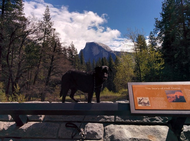 Willow standing on a bridge with Half Dome as her backdrop