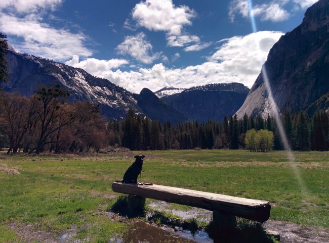 lens flare on photo of Willow sitting on a log bench looking out over a portion of Yosemite Valley