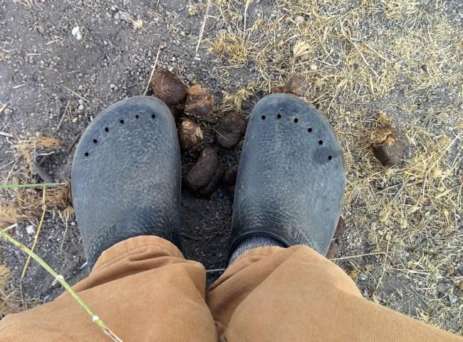 Standing in burro poop