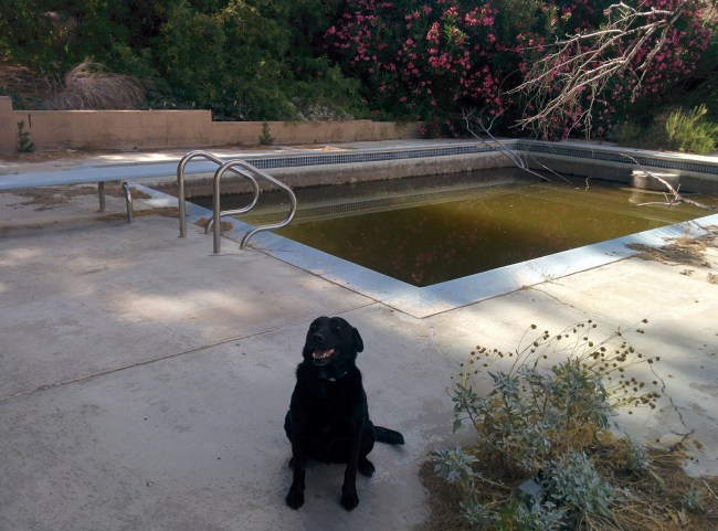 Willow in front of the pool filled with green, nasty water at the Warm Spring Camp