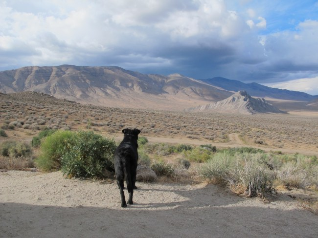 """Willow Lording Over """"Her"""" Domain As A Storm Rolls Into The Valley"""