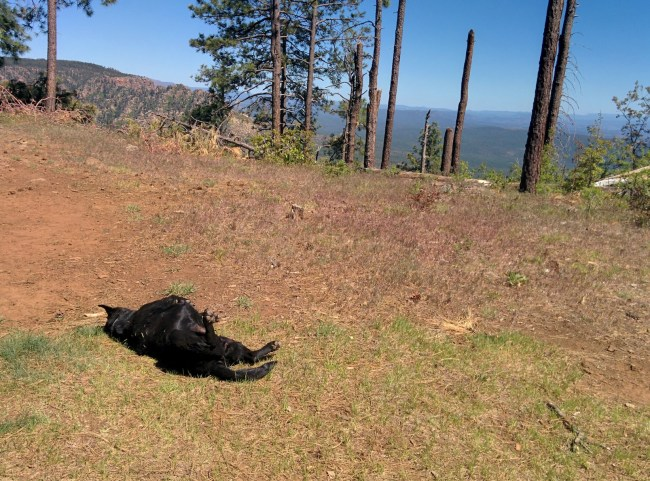 The Girl Taking a Sun Bath In Front Of Some Of Those Snapped Pine Trees