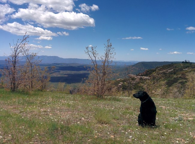 Sniffing the Mogollon Rim Breeze