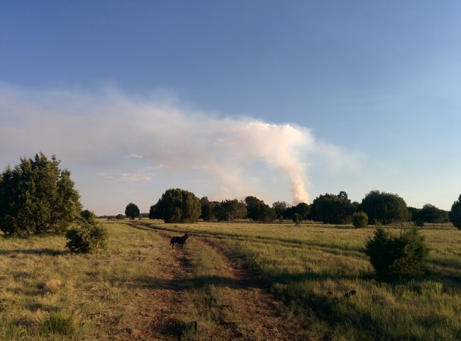 Plume Of Smoke From One Of The Prescribed Fires In The Area