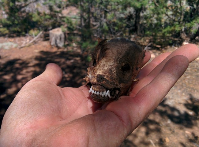 Another view of the chihuahua skull in my hand