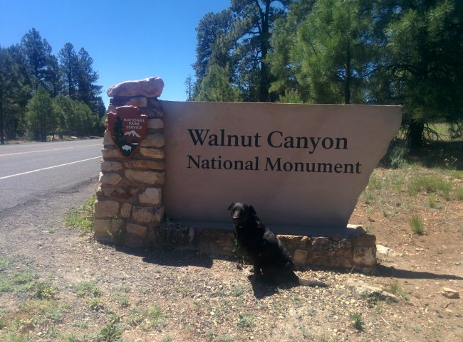 Willow in front of the Walnut Canyon National Monument sign