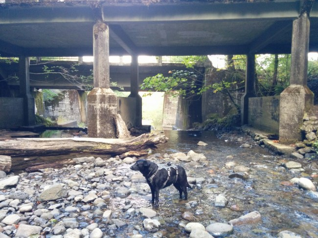 Under The Oneonta Bridge