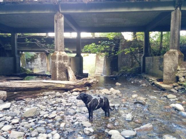 Under The Oneonta Bridge
