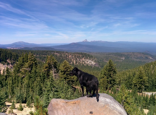 Willow standing on a rock Looking Out Over The Park With The Spire Of Mt. Thielsen In The Background
