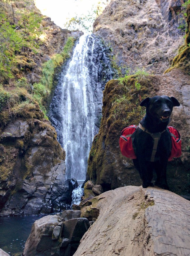 Willow in her backpack, on a downed log with Susan Creek Falls behind her