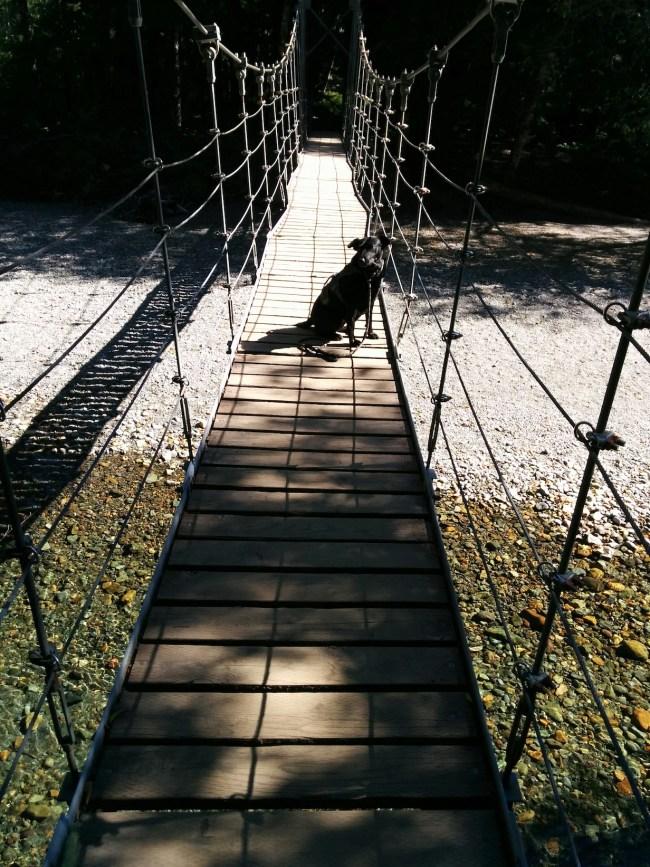 Willow On The Suspension Bridge