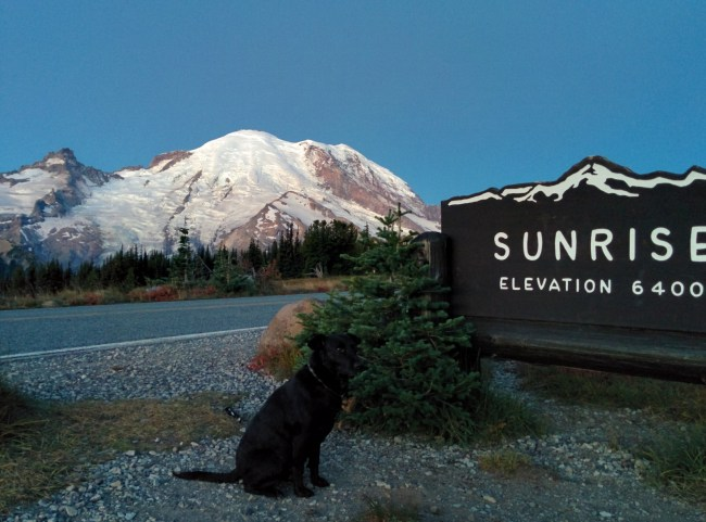 Willow sitting next to the Sunrise sign at 6400 feet before sunrise with Mt. Rainier in the background