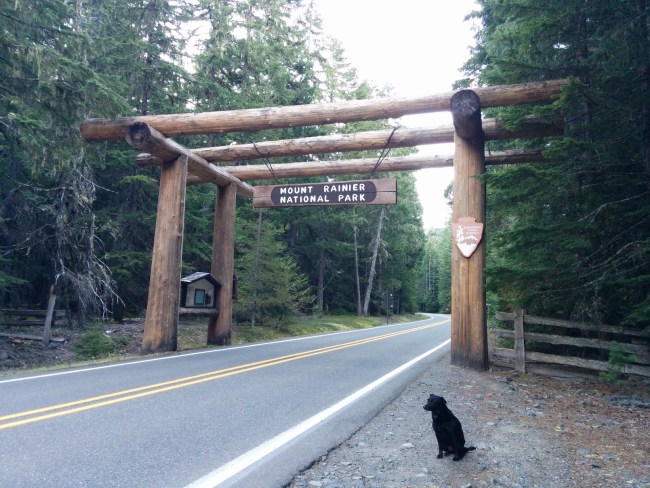 Willow sitting in front of the Mt. Rainier National Park Entranceway made of large, rough-timbered posts
