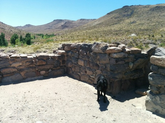 Willow next to the remains of a rock wall at Fort Piute