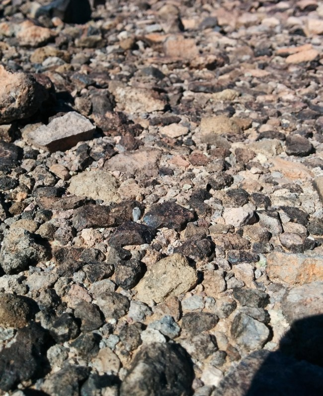 Ground composed of and littered with sharp, abrasive, bad-for-paws volcanic rock
