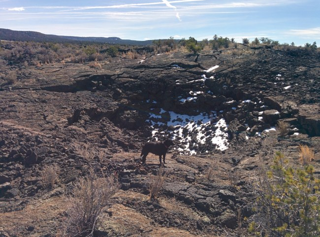 Willow standing in front of a a snow-covered collapsed lava bowl