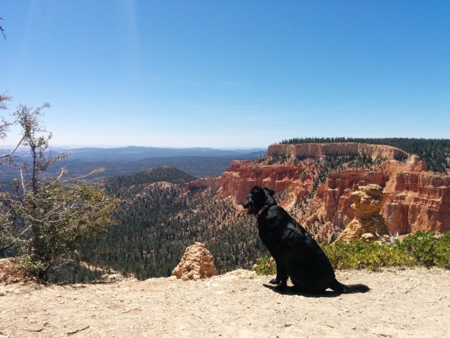 Willow Gazing In Wonder At one Of The Paria Views