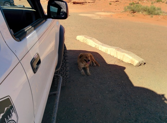 Stray res dog relaxing in the shade next to our Tacoma