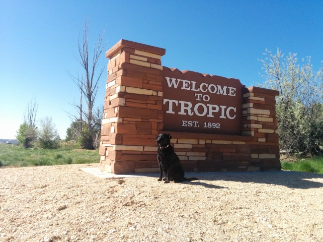 Willow sitting in front of the Tropic, UT town sign