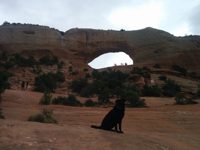 Willow sitting a hundred yards in front of Wilson Arch
