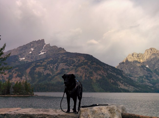 willow with the mountains surrounding Jenny Lake behind her