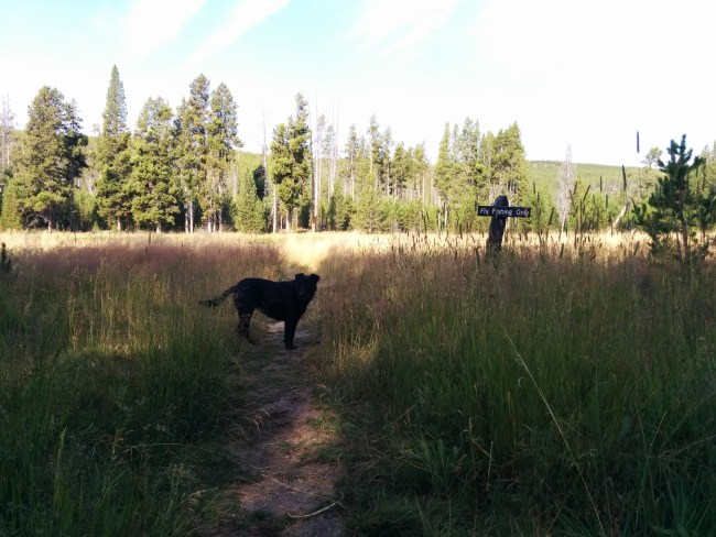 "Willow with ""Fly Fishing Only"" sign next to the Firehole river"